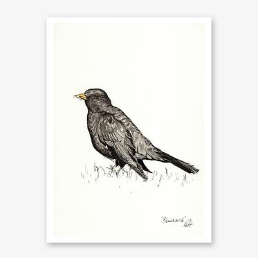 'Blackbird' Print