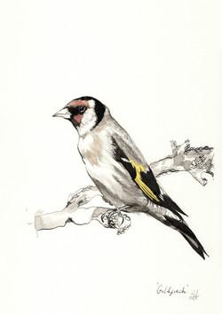 'Goldfinch'