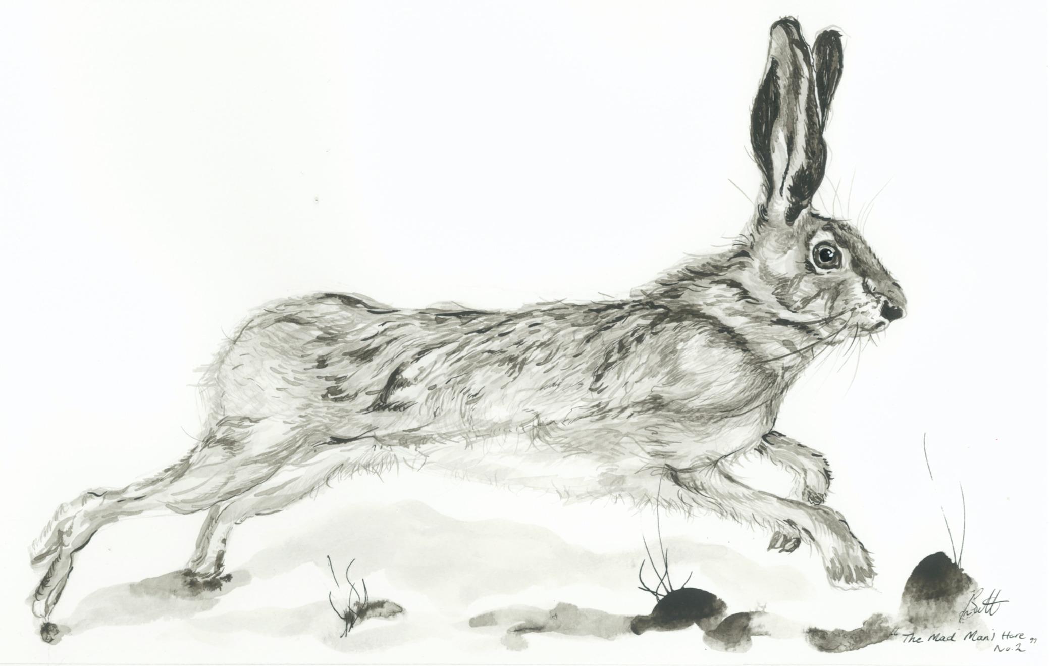 The Mad Manj Hare no.2