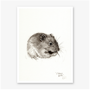 'Orkney Vole'