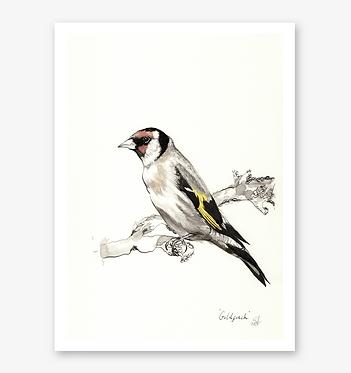 'Goldfinch' Print