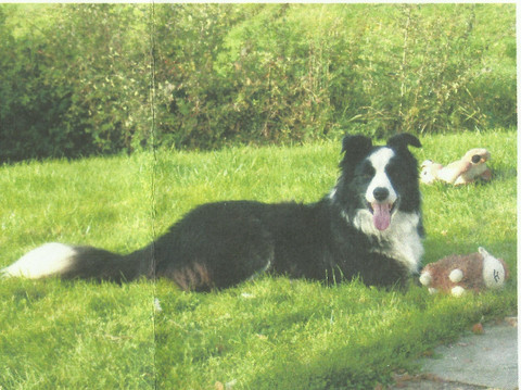 Biff the Collie