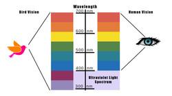 Wavelength v3