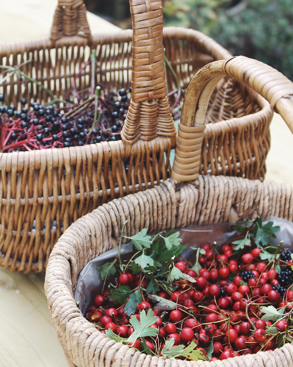Foraged autumn herbs; Elderberries, Hawthorn and Blackberries