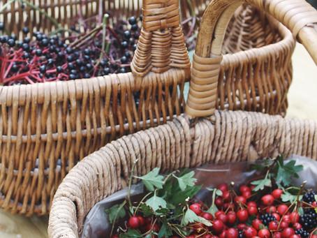 Wild Autumn Berry Elixir Recipe