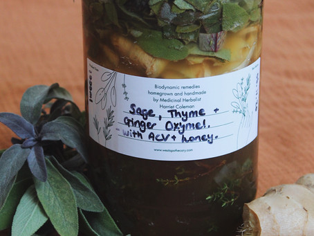 Sage, Thyme and Ginger Oxymel Recipe