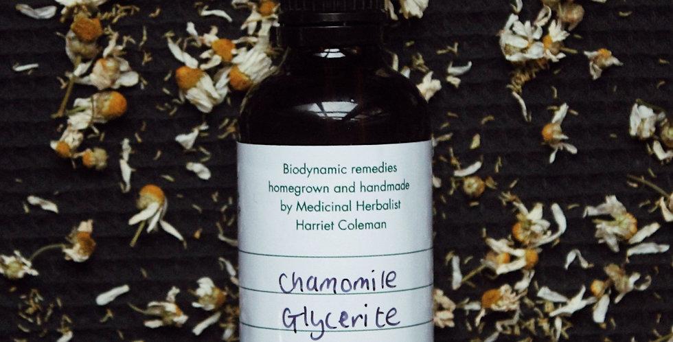 Chamomile Glycerite