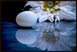 Egg Composition