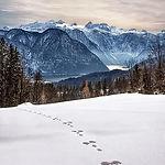 wintry-snow-traces-winter-magic-winter-c