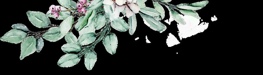flowers_transparent.png