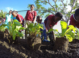 Kids-planting.jpg