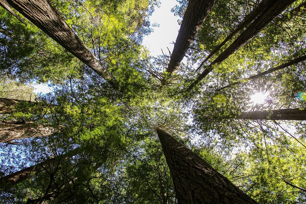 20-CA-redwoods52.jpg