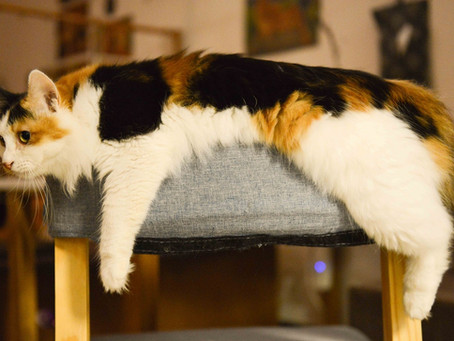 """Outdoor Balconies and """"Catios"""" for Indoor Cats – what's it all about?"""