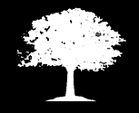 tree 3.png