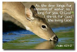 060720 deer drinking - longing for god.j