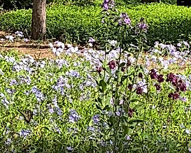 050320 Vada butterfly 2.jpg
