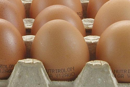 NUTRIROLON ( 54 a 60 gr. )