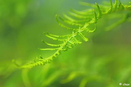 The greens .jpg.jpg.jpg  macro(micro) world .jpg.jpg.jpg