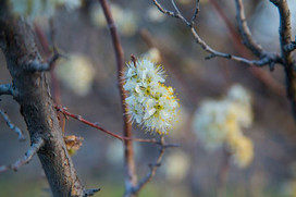 Spring nearby