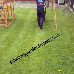 Liverpool Gardener