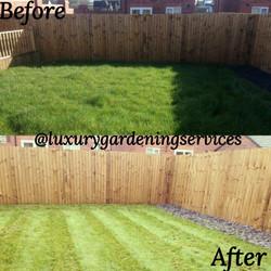 Freshly cut grass