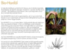 Seitenausschnitt pesönliche Homepage Maria Simon