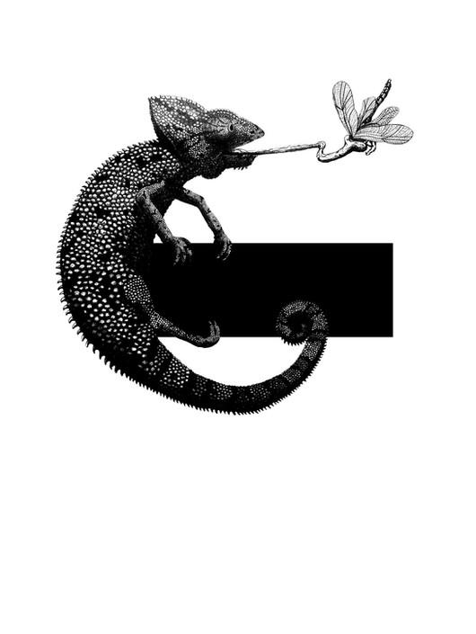 Hungry Chameleon.