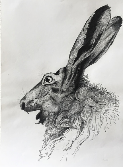 Shouting hare.
