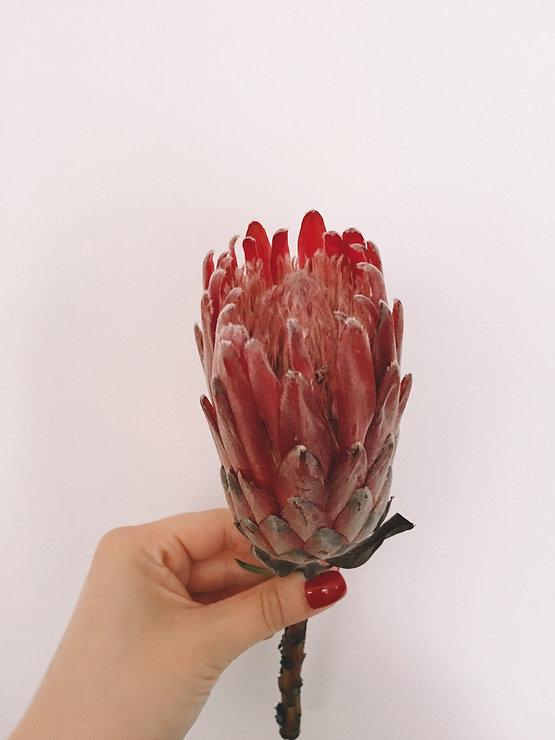 Welche Blumen Gibt Es Im September Wild Daisy Concept Store