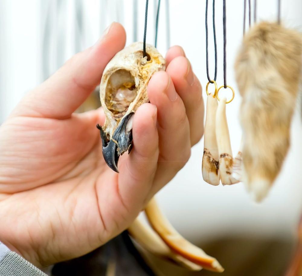 AFRICAN CRIME FICTION: Bird skull and beak as an amulet or talisman (Photo: Amtiko/Shutterstock)