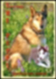 The puppy-A True Story.jpeg