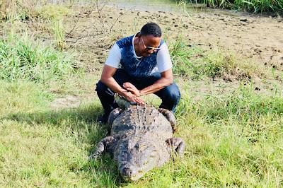 """My Top Ten Ghana Scenes: """"Domesticated"""" crocodile, Paga, Northern Region (Photo: M. Zakari)"""