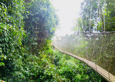My Top Ten Ghana Scenes: Canopy walkway at Kakum National Park, Central Region (Photo: Kwei Quartey)