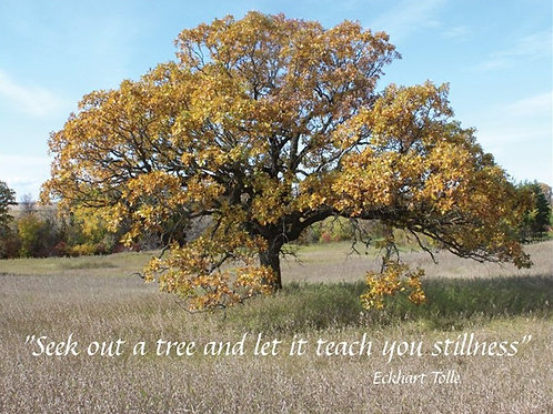 """""""Seek out a tree and let it teach you..."""""""