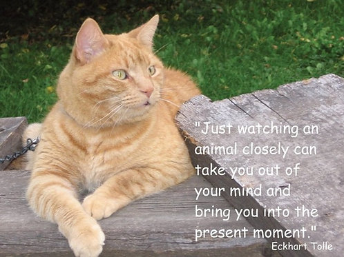 Just watching an animal closely...