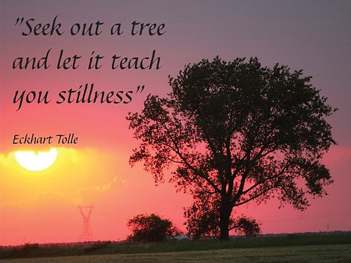 """""""Seek out a tree and let it teach you stillness"""""""