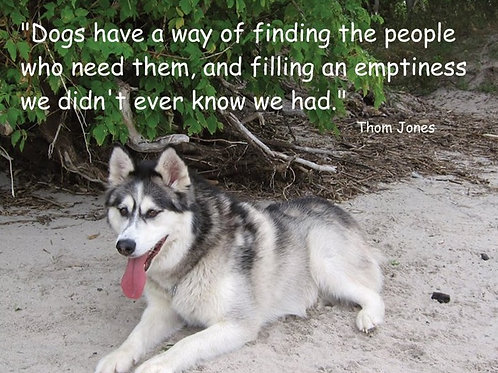 Dogs have a way of finding the people who need them