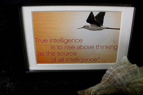 """""""True intelligence is to rise above..."""""""