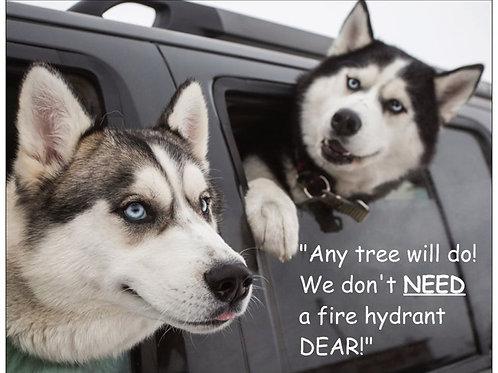 Any tree will do!