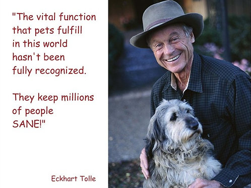The vital function that pets fulfill - Man
