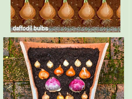Different Ways to Plant Bulbs
