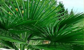 5 Architectural Plants for your Tropical Garden