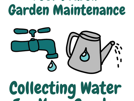 Collecting Water For Your Garden