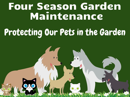 A Pet Friendly Garden (1 of 3)