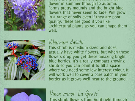 Planting theme Blue
