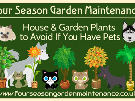 A Pet-Friendly Garden (2of3) Plants to Avoid