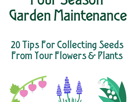20 Tips For Collecting Seeds From Your Flowers & Plants
