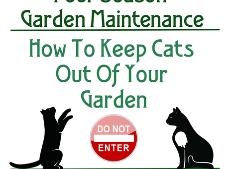 How To Keep Cats Out Of Your Garden?