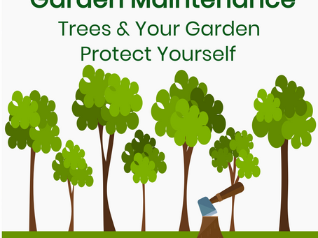 Trees and your Garden – Protect Yourself