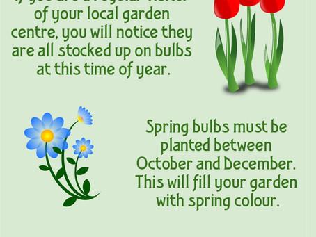 Spring Bulbs - Plant in Autumn!